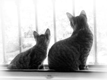 Tierische Begleiter Dafne - Katzen im Fenster