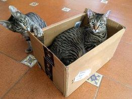 Tierische Begleiter Dafne - Karton