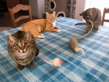 Tierische-Begleiter_Runa__Tigerlis