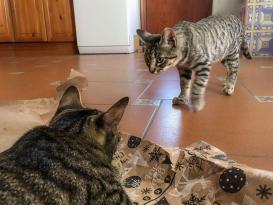 Tierische-Begleiter_Ronda__Spielen-mit-Dafne