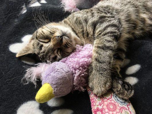 Tierische-Begleiter_Ronda__Schlafen-Spielzeug