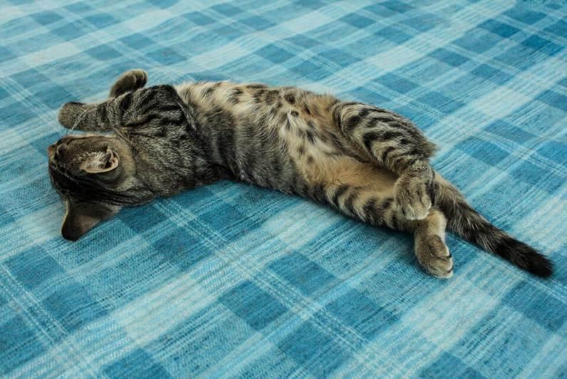 Tierische-Begleiter_Ronda__Schlafen-verdreht