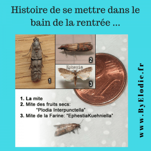 mites alimentaires