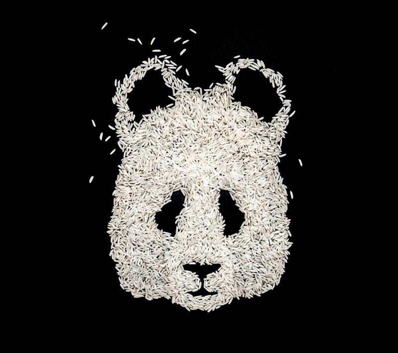 Ricebear / Domenic Bahmann / 2014