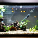 29g Aquarium Journal: Plotting Changes