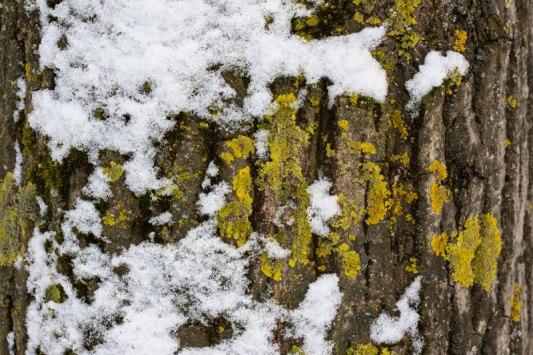 arbre-et-neige-1