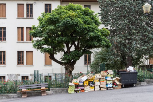 Un-arbre-en-centre-ville-Bourg-Saint-Maurice