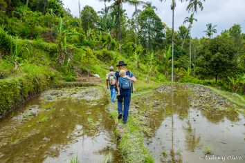 Walking through the ricefields