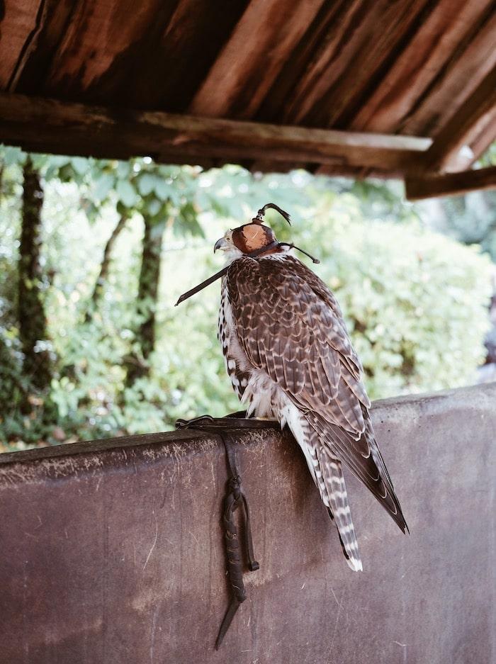 Spectacle rapaces Bal des oiseaux Fantômes blog voyage By Opaline Lyon France
