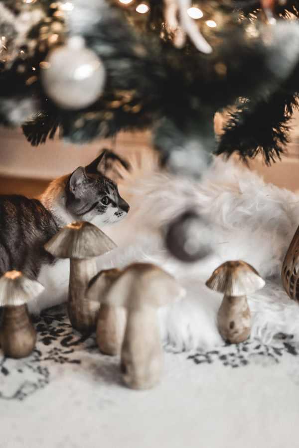 Mon petit chat adore Noël. À peine le sapin installé elle est déjà dedans !