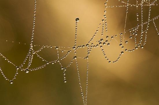 Photograph by Byron Jorjorian ©