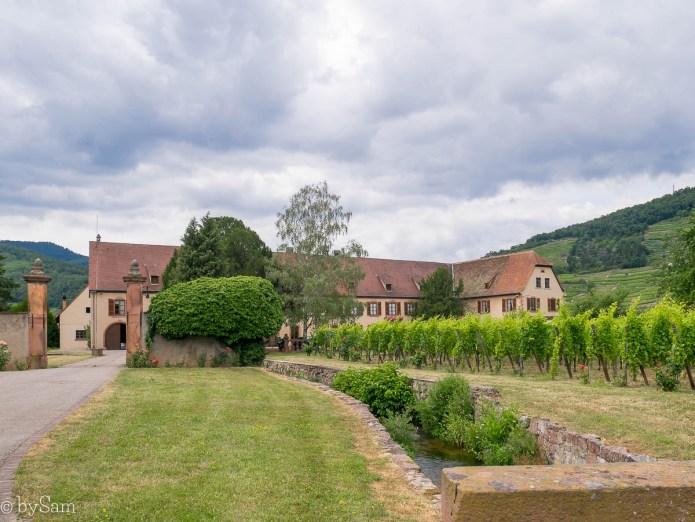 Domaine Weinbach Kaysersberg Alsace wijnboer