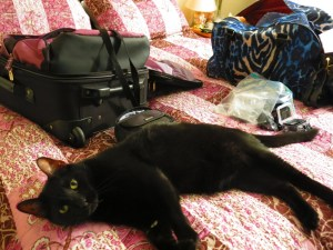 Zeb hopes we'll mistake him for an extra piece of luggage so he can go, too!
