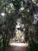 Walk to Wormsloe Ruins