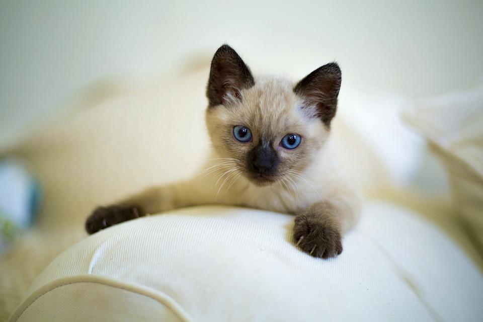 ソファーのネコ