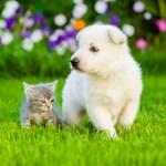子犬と子猫の散歩