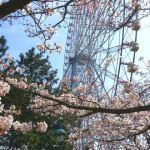 葛西臨海公園桜
