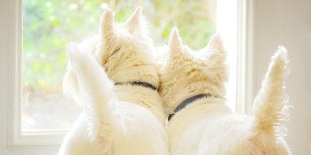 犬のしっぽ右左