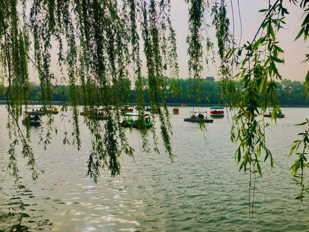 Willow trees for the Feast of Tabernacles - byZipporah Blog