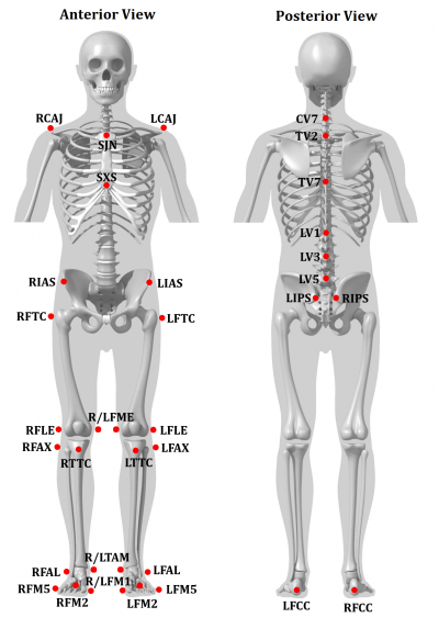 Body Of Sternum Diagram Tutorial Ior Gait Full Body Model Visual3d Wiki