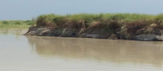 Trend of erosion in Kaziranga NP: PC- Manik Boruah