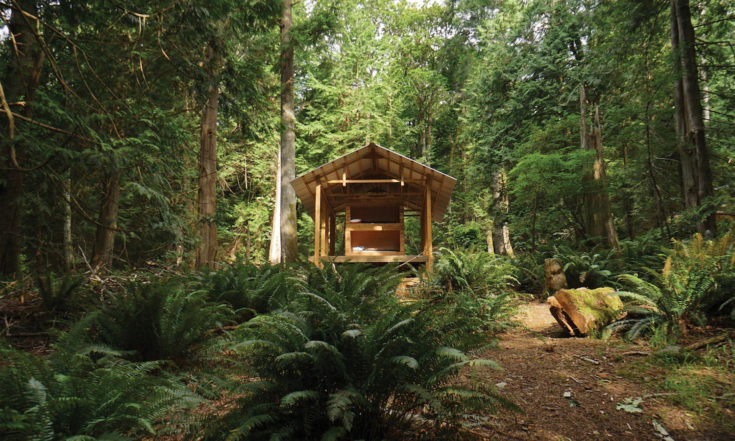 Offthegrid cabin set in middle of an islands rainforest