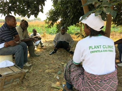 Farmers' validation of factsheets during Plantwise training in Lusaka, Zambia
