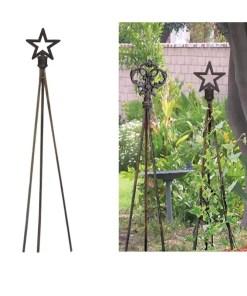 star-plant-trellis