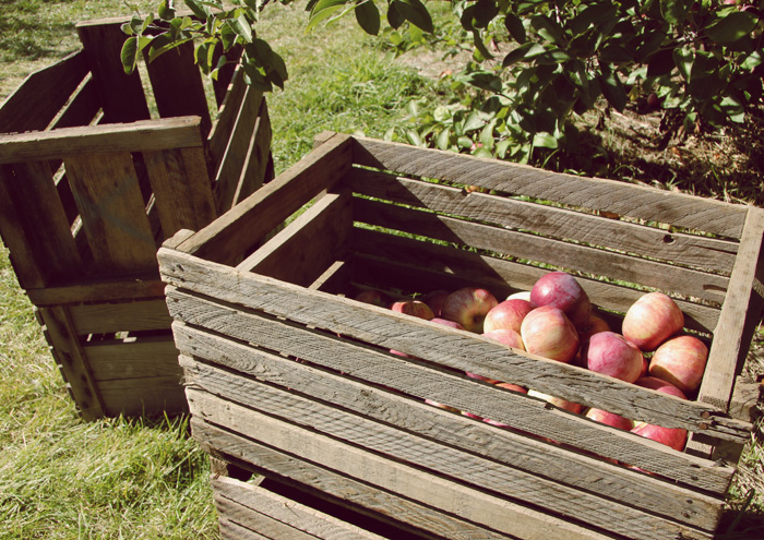 Lazy Saturday: Apple Picking