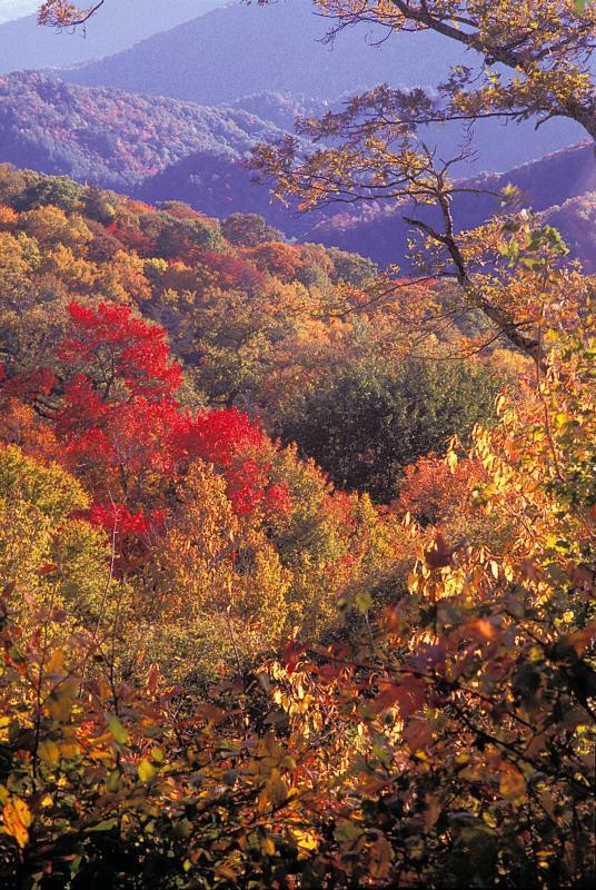 Smoky Mountain Scenic Drives Gatlinburg Outdoor Activities