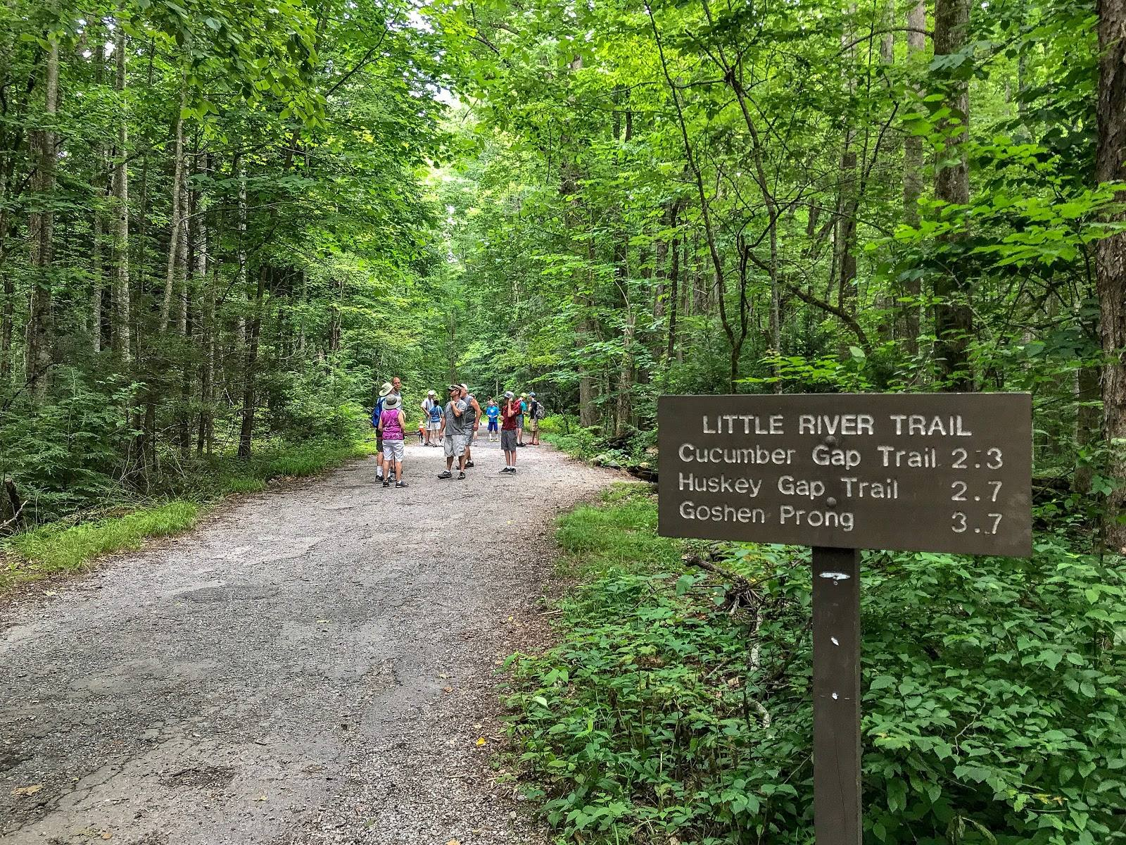 The trail offers river access, a relaxing walk in. Little River Trail An Easy Walk In The Smoky Mountains
