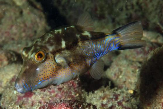 Cabo Verde serra negra _0046