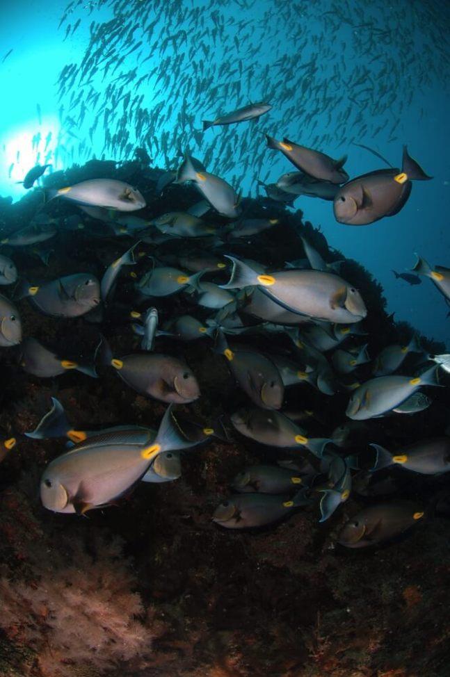 Cabo Verdemorro das pedras _0027