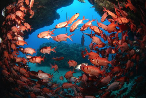 Dive sites 3grotes Cabo Verde7