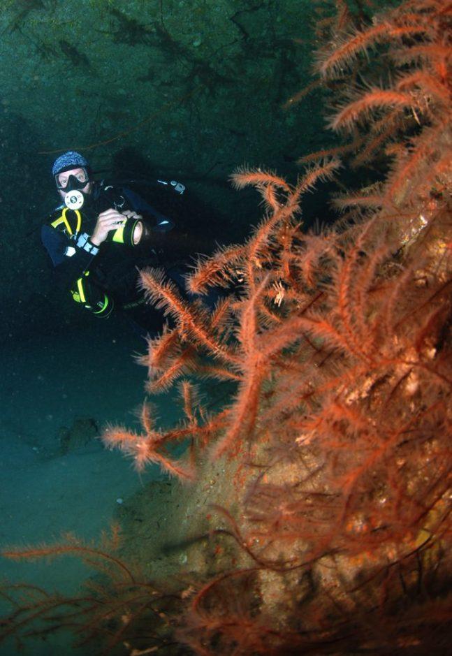 Dive sites Regona Cabo Verde2