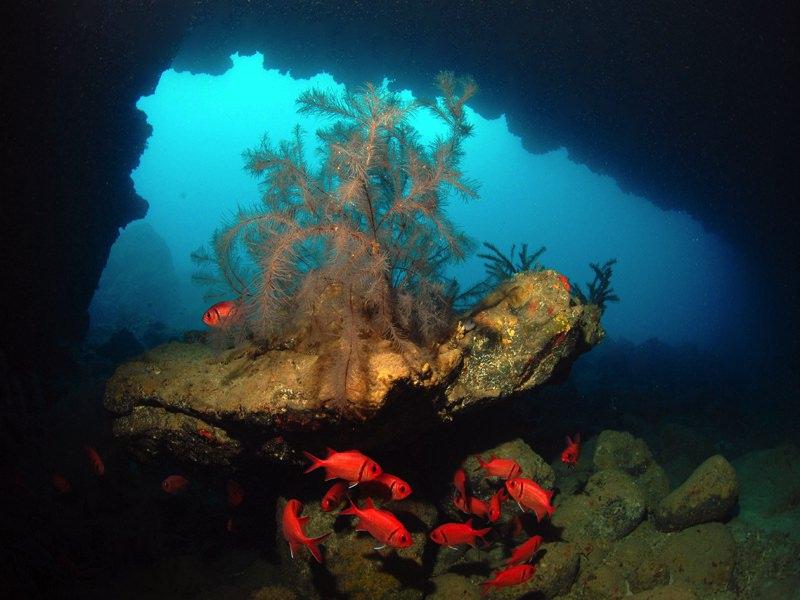 Dive sites Regona Cabo Verde4