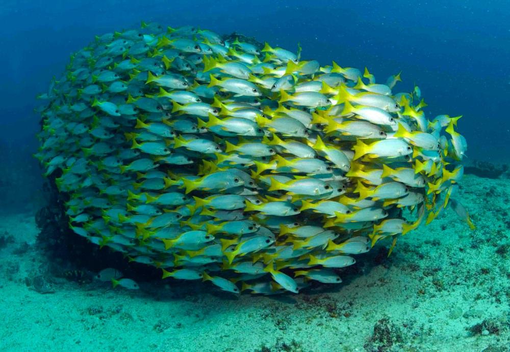 Dive sites cavala Cabo Verde7