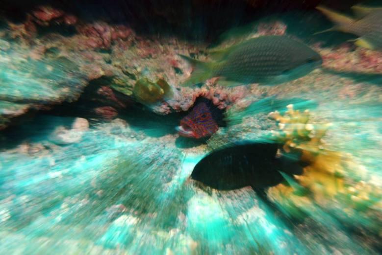 Dive sites farol Cabo Verde3
