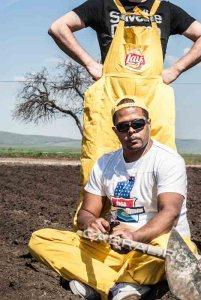 plantare cartofi Lays 7