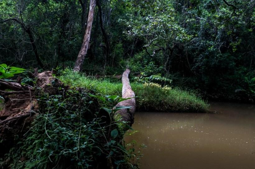 Sunt Celebru - Scoate=mă de-aici! - jungle picture (4 of 7)