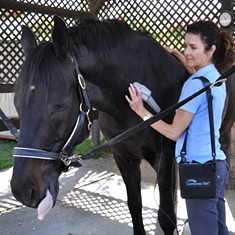 Equine Cold Laser Therapy