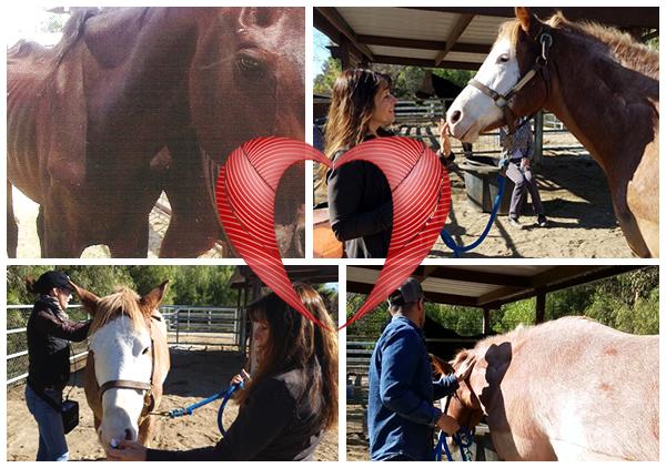 Healing, Horses & Humans
