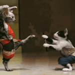 Are My Cats Fighting Or Playing? This Ways How to Know