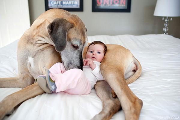 Resultado de imagen para perros y bebes