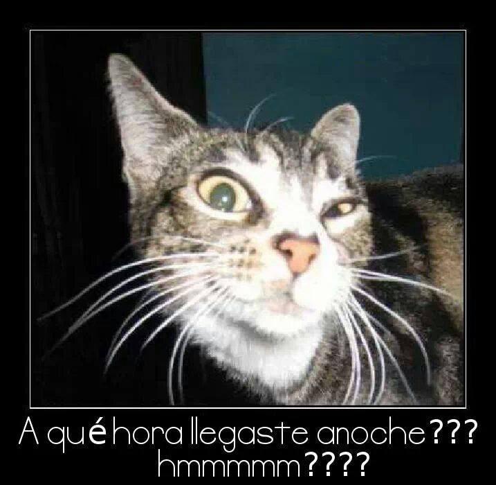 Fotos-De-Animales-Gracioso-Para-Facebook-1