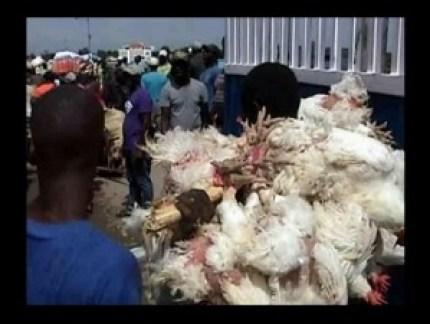 Pollos en frontera