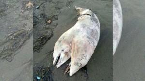 delfin (1)