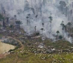 destructores de selvas