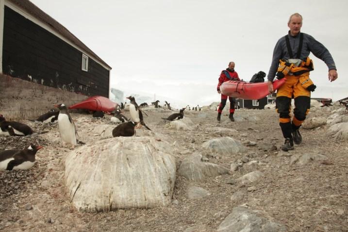 carry_kayak_penguins