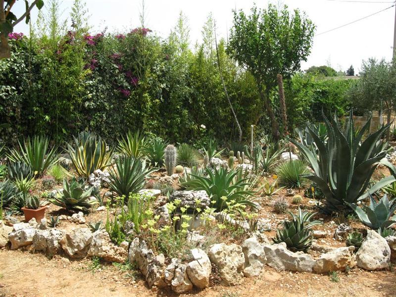 Giardini rocciosi  Forum di Giardinaggioit